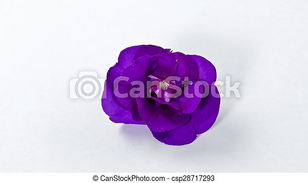 Purple flowers on a white background mightylinksfo