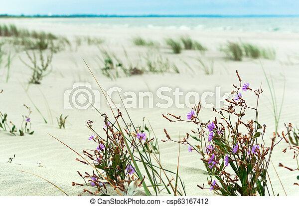 purple flowers on the beach - csp63167412