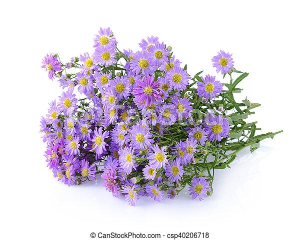 Purple flowers on white background stock photography search purple flowers on white background csp40206718 mightylinksfo Choice Image