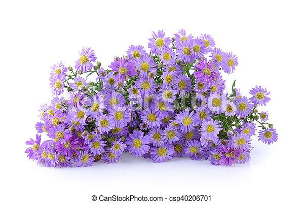 Purple flowers on white background purple flowers on white background csp40206701 mightylinksfo