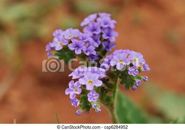 Purple Flowers Little Purple Flowers