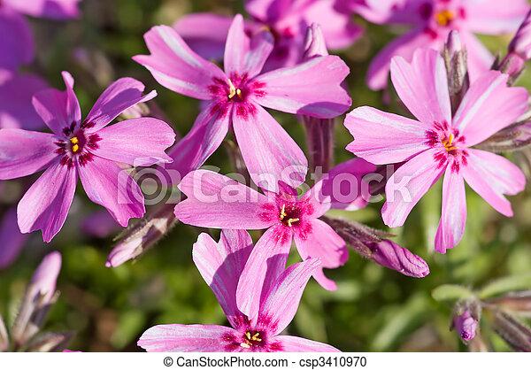 purple flowers - csp3410970