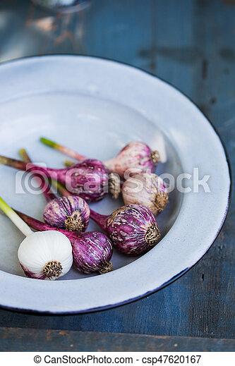 purple Garlic in a bowl - csp47620167