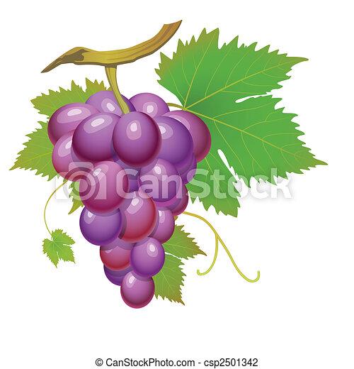 Purple grape - csp2501342