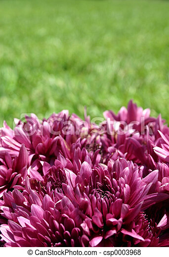 Purple & Green - csp0003968