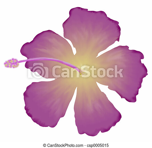 Purple Hibiscus - csp0005015