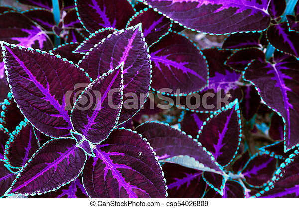 Purple Leaves Texture Leaf Texture Background For Wallpaper Or