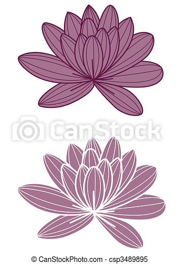 Purple Lotus Flower Two Purple Lotus On The White Background