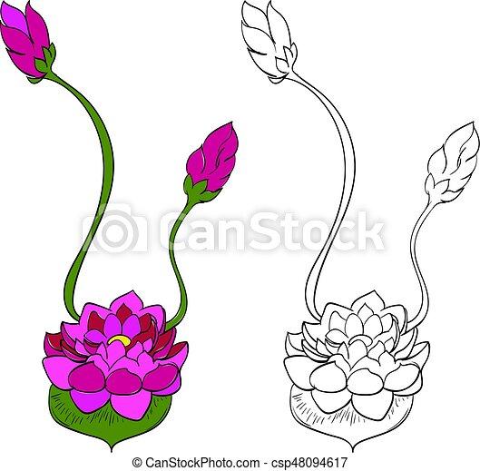 Purple Lotus Flower Water Lily Purple Lotus Flower Illustration On