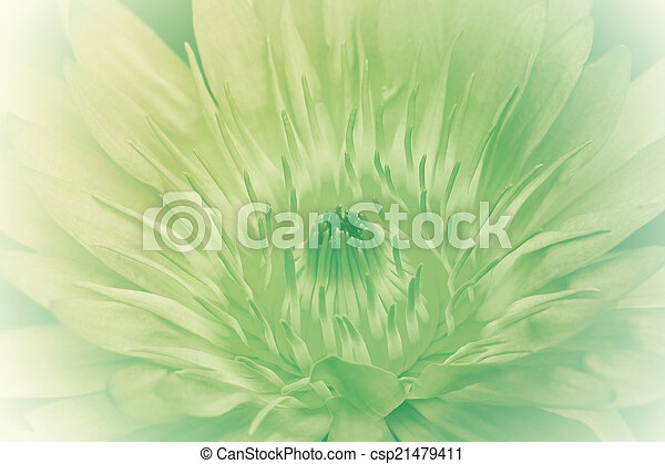 Purple lotus. - csp21479411