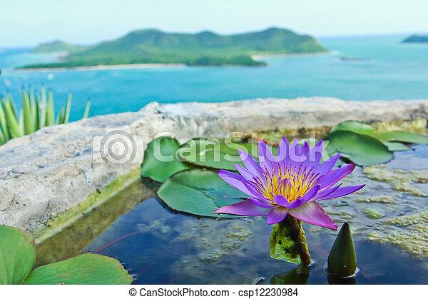 Purple Lotus - csp12230984