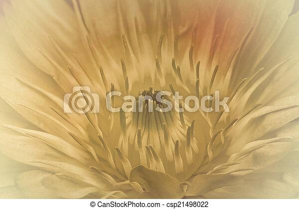 Purple lotus. - csp21498022
