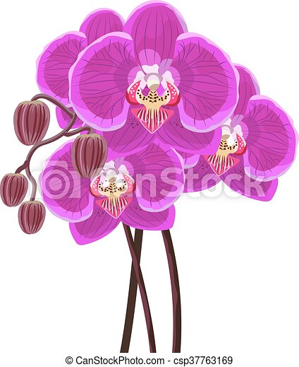 Purple orchid branch on white background. - csp37763169