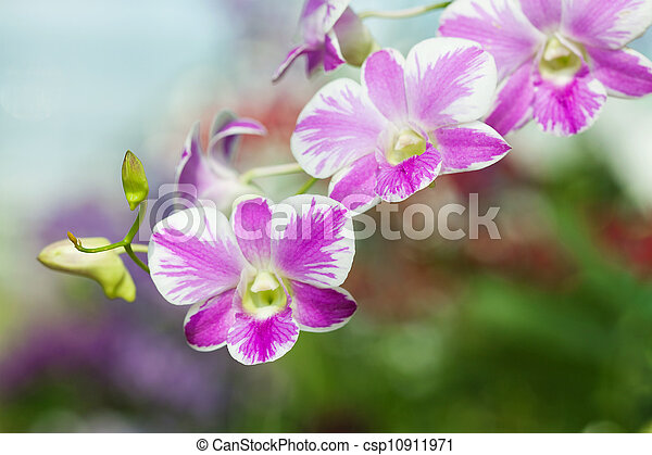 Purple orchids - csp10911971