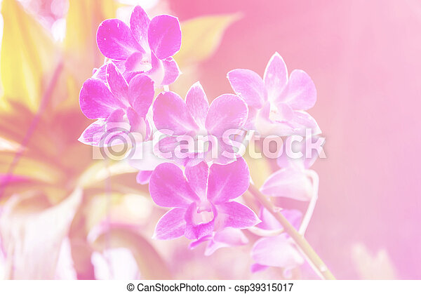 Purple orchids - csp39315017