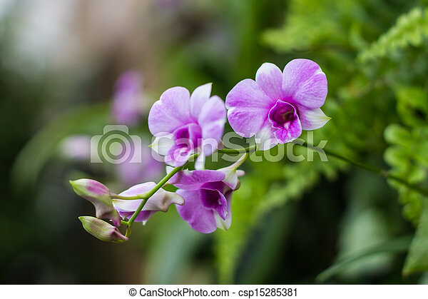 Purple Orchids - csp15285381