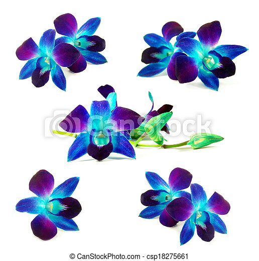 Purple Orchids Beautiful Purple Orchid Flowers Set