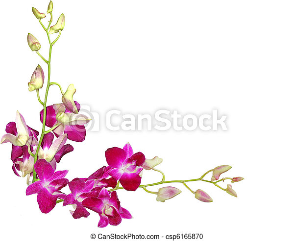 Purple orchids - csp6165870