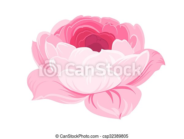 Purple Rose On White Background