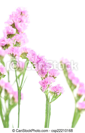 Purple statice flowers isolated on white background stock image purple statice flowers isolated on white background csp22210168 mightylinksfo Images