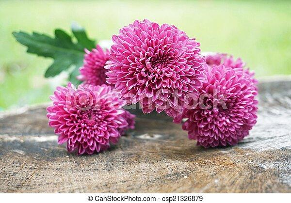 purpurowe kwiecie - csp21326879