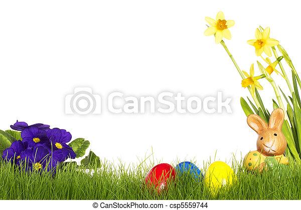 purpurowy, jaja, żonkil, tło, mały, biały, wielkanocna trusia, primula - csp5559744