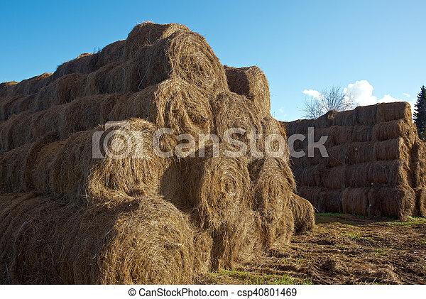 pyramid of hay - csp40801469