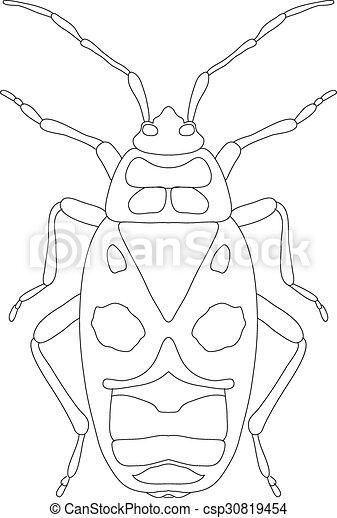 Pyrrhocoris Apterus Beetle Bug Soldier Sketch Of Beetle Beetle