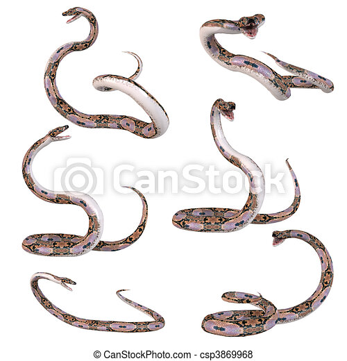 python, snake-reticulated - csp3869968