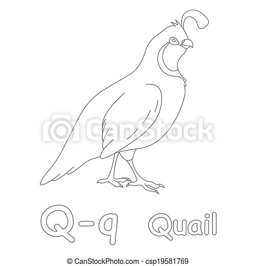 Q For Quail Coloring Page