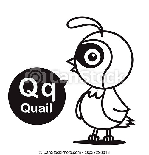 Q Quail Cartoon And Alphabet For Children To Learning And Coloring