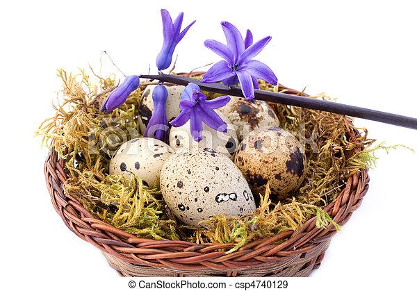 Quail Eggs And Blue Hyacinth - csp4740129