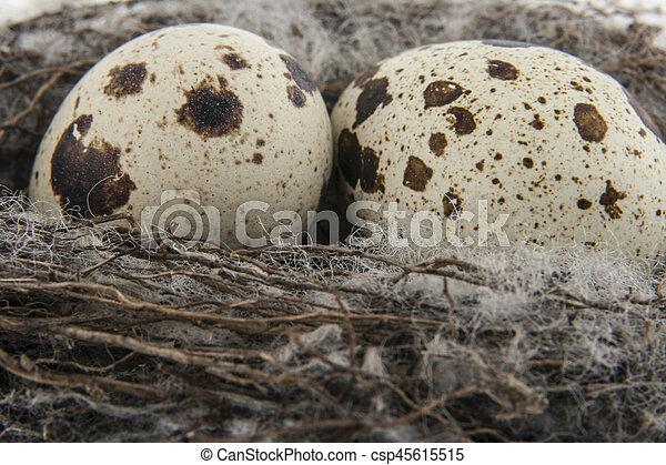 Quail eggs in a nest - csp45615515