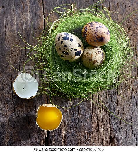 quail eggs in a nest - csp24857785