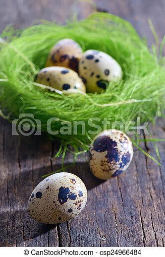 quail eggs in a nest - csp24966484