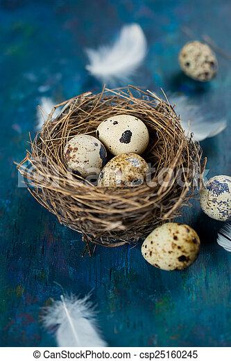 quail eggs in a nest   - csp25160245
