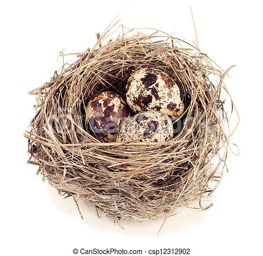 Quail eggs in a nest - csp12312902