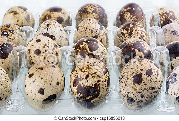 quail eggs - csp16836213