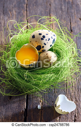 Quail eggs  - csp24788786
