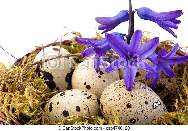 Quail Eggs - csp4740120