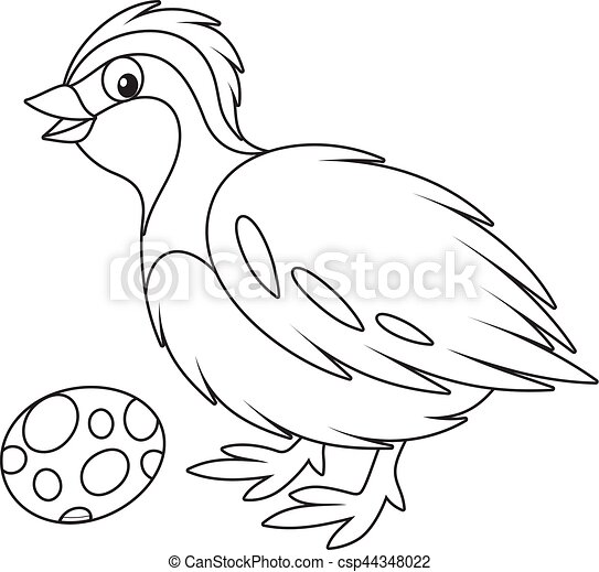 quail black and white vector illustration of a small quail and its