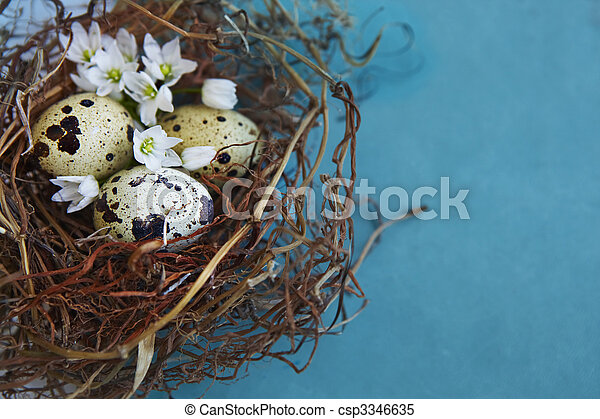 quail nest with spotted aggs. - csp3346635