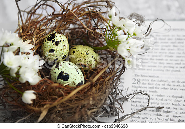 quail spotted eggs in a twig nest - csp3346638