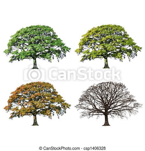 quattro, quercia, astratto, albero, stagioni - csp1406328