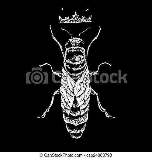 queen bee - csp24083798