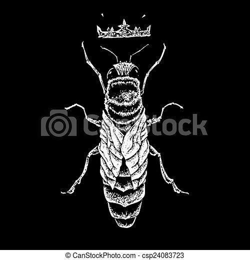queen bee - csp24083723