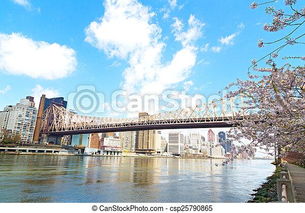 Queensboro Bridge and cherry blossom over Manhattan, New York city. The bridge over East River in New York, USA. - csp25790865