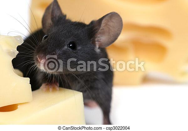 Ratón y queso - csp3022004