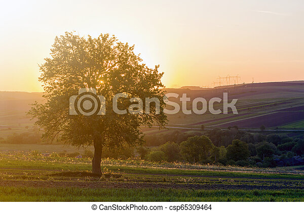 Quiet and peaceful view of beautiful big green tree at sunset growing alone in spring field on distant hills bathed in orange evening sunlight and high voltage lines stretching to horizon background. - csp65309464