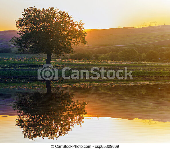 Quiet and peaceful view of beautiful big green tree at sunset growing alone in spring field on distant hills bathed in orange evening sunlight and high voltage lines stretching to horizon background. - csp65309869